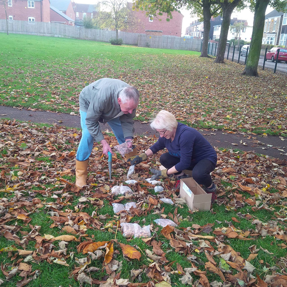 Bulb Planting in Victoria Park – Mexborough