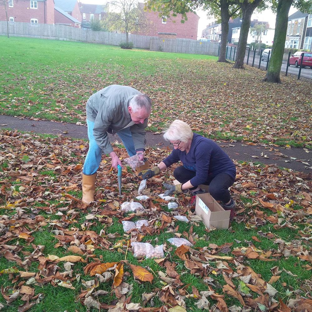 Bulb Planting in Victoria Park – Mexborough